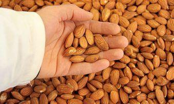 In Nordamerika müssen Mandeln dekontaminiert werden, bevor sie in den Handel gebracht werden.